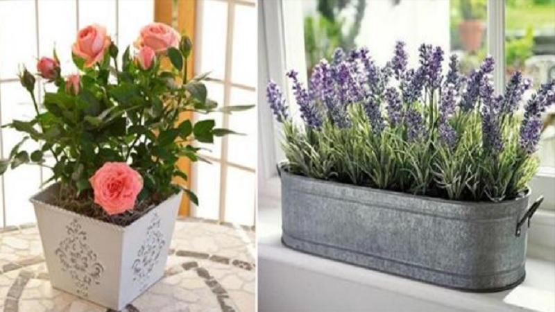 15 plantes et fleurs qui apporteront plus de positif et de bonheur dans votre maison. Black Bedroom Furniture Sets. Home Design Ideas