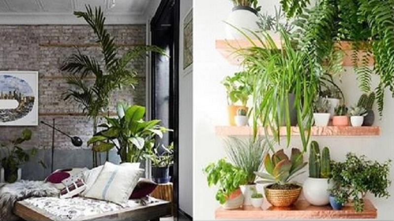 20 inspirations pour d corer votre maison avec des plantes. Black Bedroom Furniture Sets. Home Design Ideas