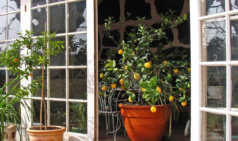 8 arbres fruitiers que vous pouvez cultiver partir des graines et des noyaux de vos fruits. Black Bedroom Furniture Sets. Home Design Ideas