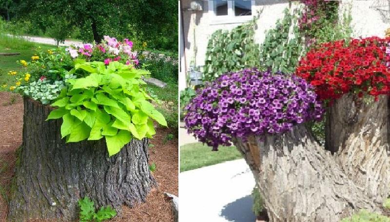 impossible de retirer une souche d 39 arbre de votre jardin voici 13 belles id es pour la mettre. Black Bedroom Furniture Sets. Home Design Ideas