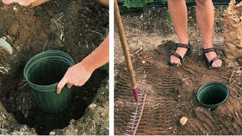 ce sont des conseils que vous devez conna tre avant de planter vos graines dans votre potager. Black Bedroom Furniture Sets. Home Design Ideas