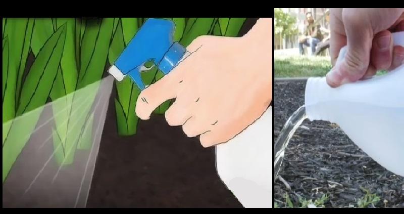 """Résultat de recherche d'images pour """"Voici comment utiliser le vinaigre dans votre jardin"""""""